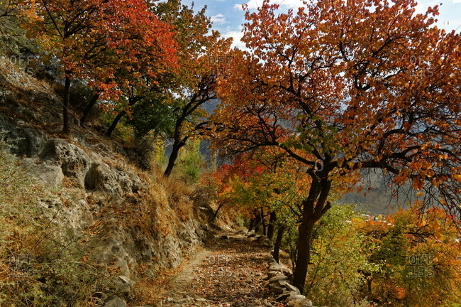 Trail with autumn leaves, Pakistan
