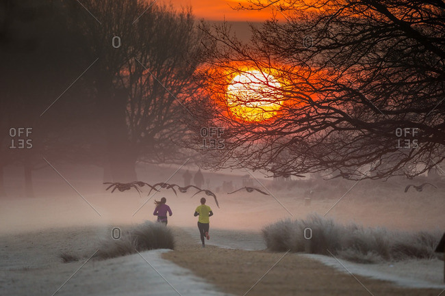 Geese flying over joggers in Richmond Park at sunrise, London