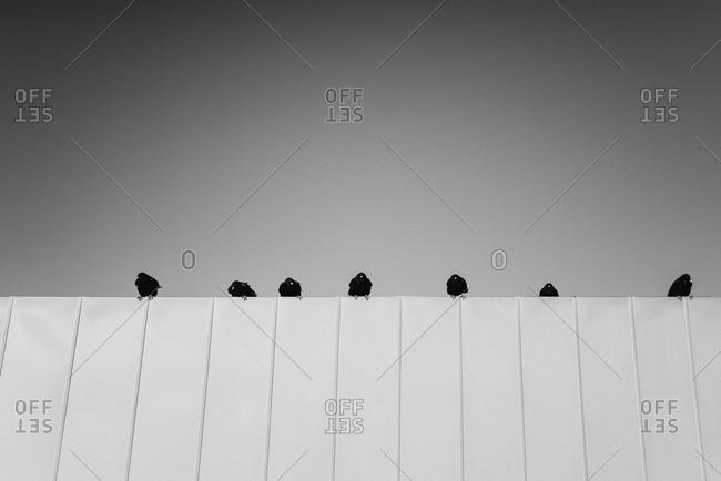 Black birds sitting on a ledge in a row