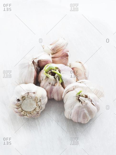 Close up of overgrown garlic
