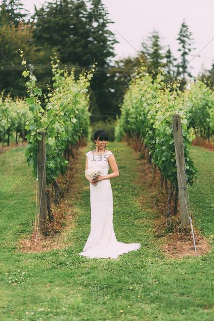 Bride standing between vines in a vineyard