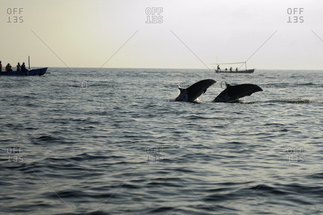 Indonesia, Bali, Singaraja, Lovina Beach, observing dolphins in outrigger canoes