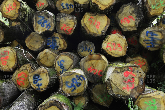 France, Western France, Vendee, stacking of numbered logs in the forest of Vouvrant