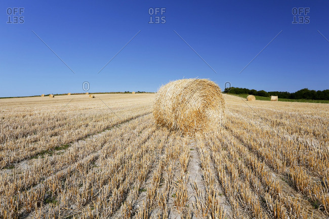France, Normandy, Montmartin-sur-Mer, Haystacks mechanically rolled at the time of harvest.