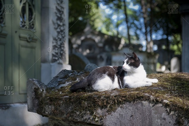 France, Paris 20th district. Pere Lachaise cemetery. A cat on a grave