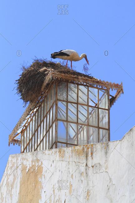 Portugal, Algarve. Faro. Stork.