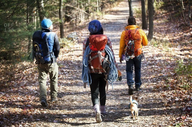 Rear view of friends with backpacks walking on road in forest