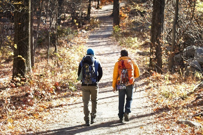 Rear view of male friends with backpacks walking on road in forest