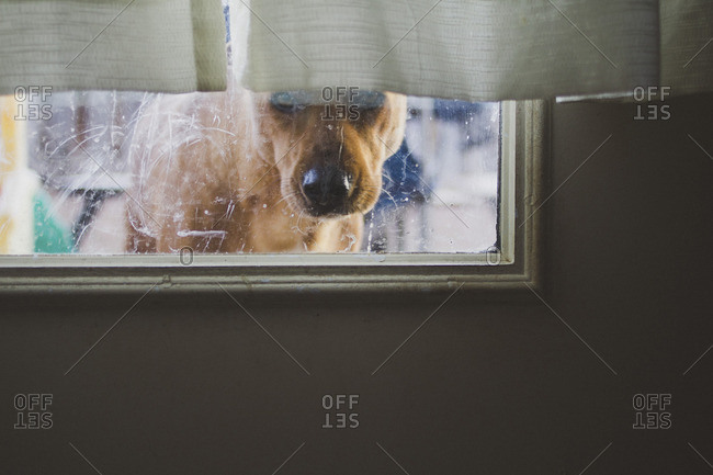 Dog seen through window