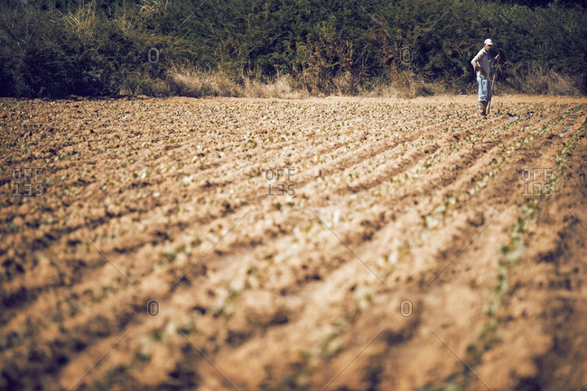 Man standing on cultivated field