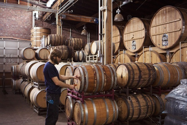 Side view of brewer taking beer from barrel in warehouse