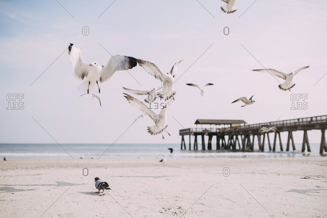 Seagulls flying at beach against sky