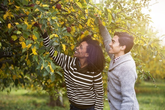 Smiling couple picking apples in orchard