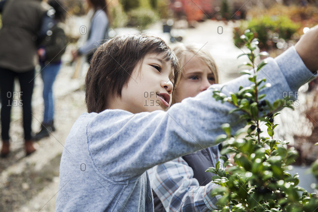 Curious boys examining plants during field trip