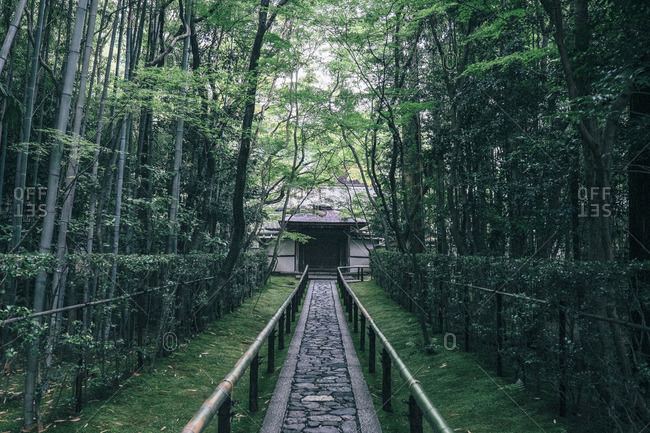 Walkway amidst trees at Daitoku-ji temple