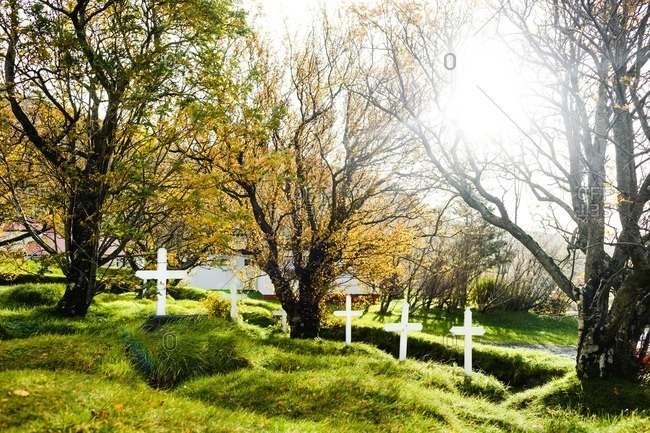 Cemetery in Iceland. Tranquil sunny morning at small cemetery, white wooden crosses seen on graves covered with green grass and surrounded by half yellow trees. Sunbeams shining brightly through tree branches.