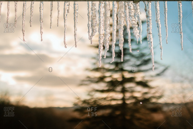Icicles hanging in sunlight