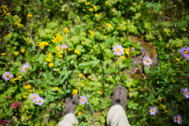 Looking down at boots standing in mountain meadow in summer