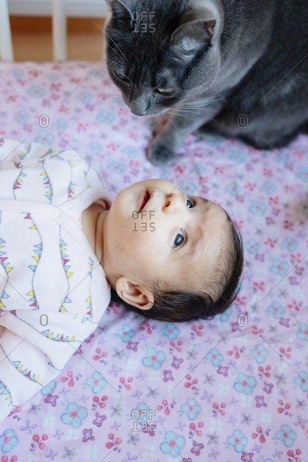 Cute baby girl lying in a crib with a gray cat