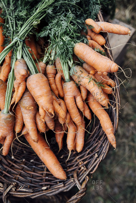 Carrots bunches in basket