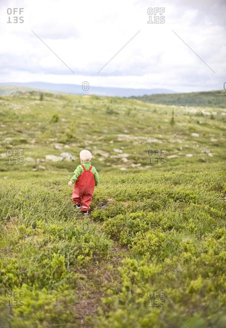 Little boy walking in meadow