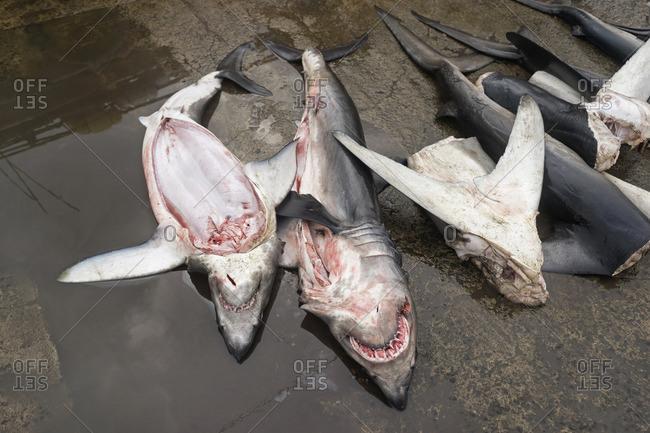 Sharks for sale at market stall, Western Province, Sri Lanka