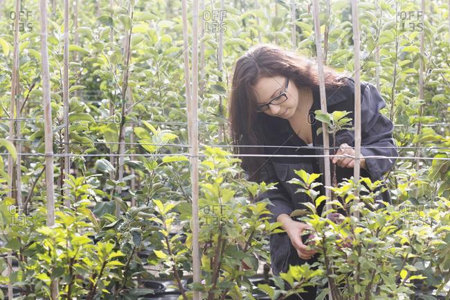 Young woman examining plants in a garden, Freiburg im Breisgau, Baden-Wurttemberg, Germany
