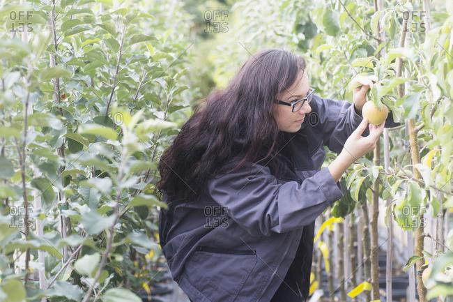 Young woman examining apple in a garden, Freiburg im Breisgau, Baden-Wurttemberg, Germany