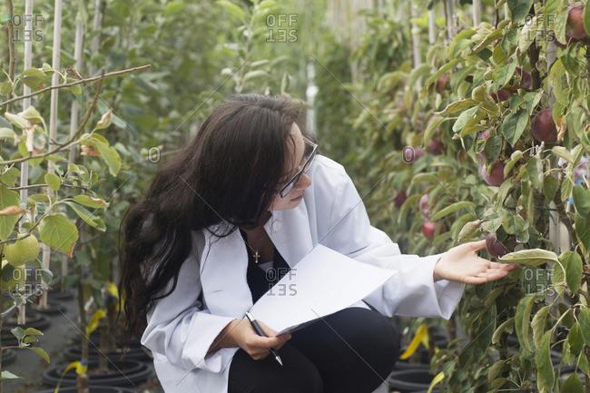 Female scientist inspecting plants at greenhouse, Freiburg im Breisgau, Freiburg im Breisgau, Germany