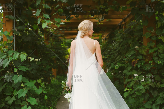 Bride with long veil by vine covered arch