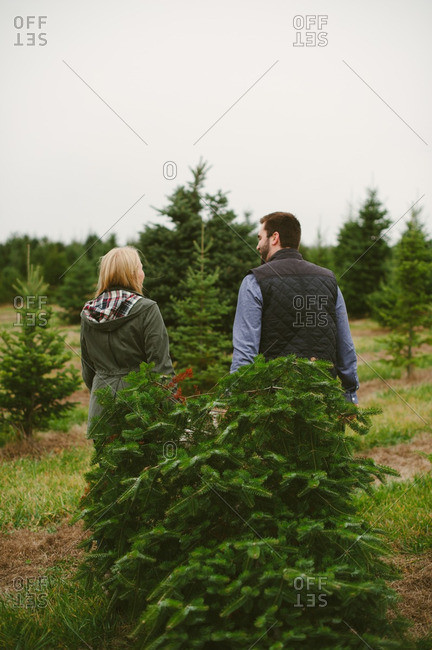 Couple dragging a Christmas tree