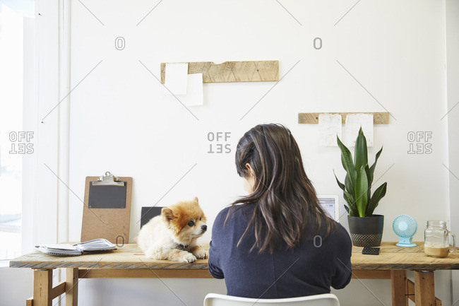 Rear view of businesswoman looking at young Pomeranian sitting on desk in creative office