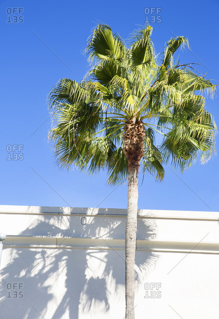 Palm tree with shadow on building in Los Angeles