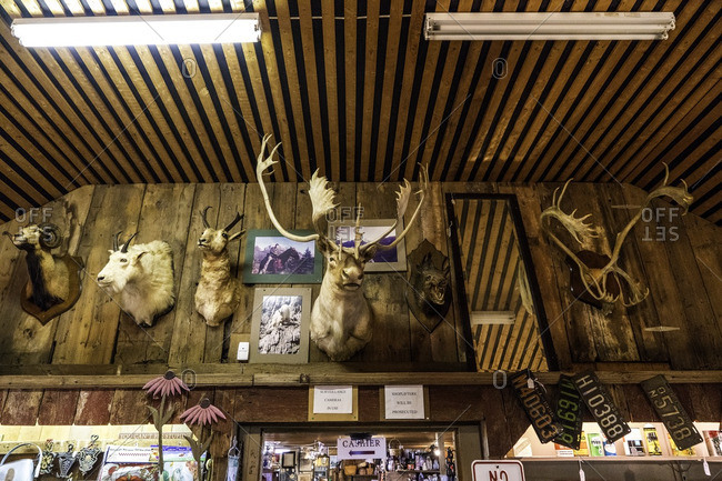 July 28, 2016: Various stuffed animal heads on the wall of a shop