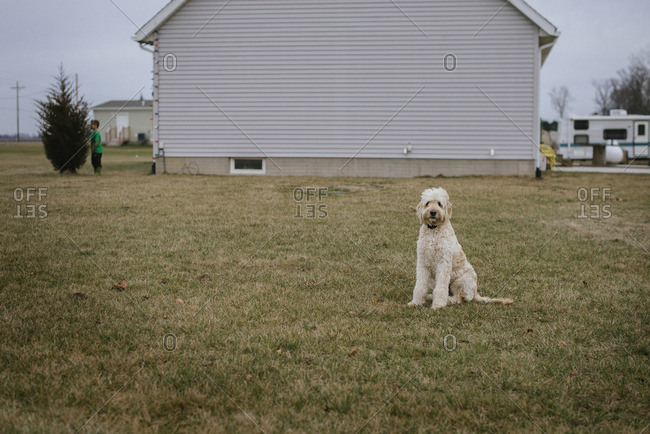 White dog in yard of rural house