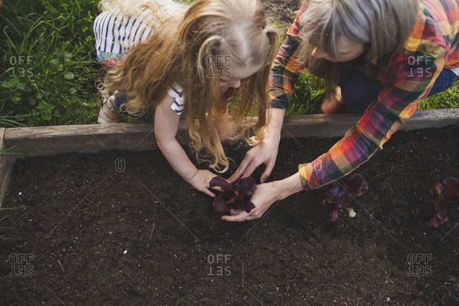 High angle view of mother and daughter planting in raised bed