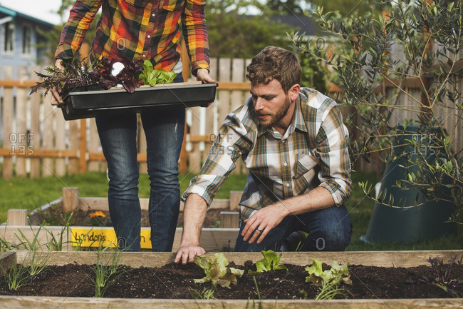Midsection of woman standing by man planting in raised bed