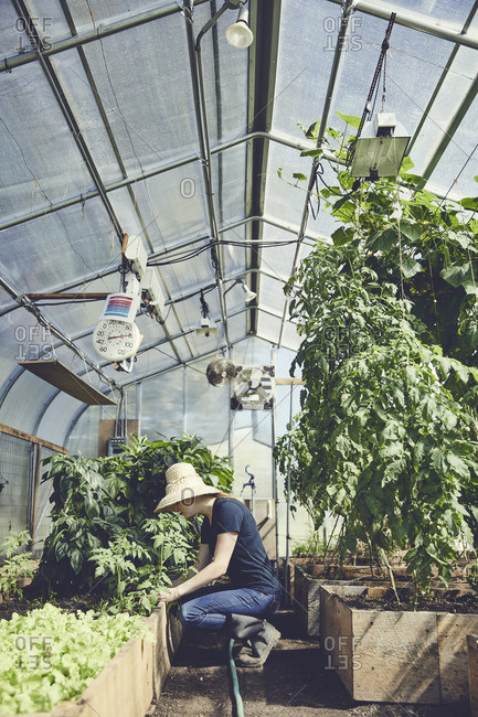 Side view of woman gardening in greenhouse