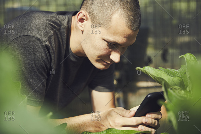 Young male farmer using smart phone in plant nursery