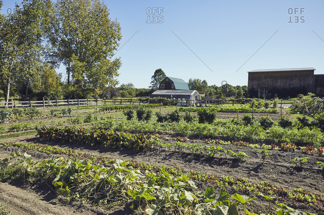 View of cultivated farm against clear sky