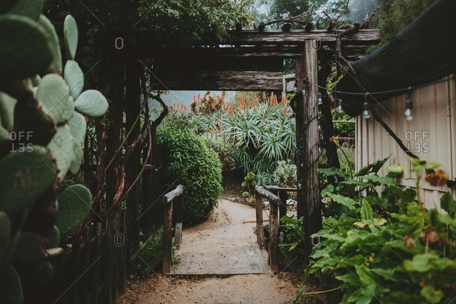 Path in a tropical garden