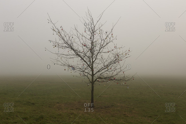 Bare tree in rural mist