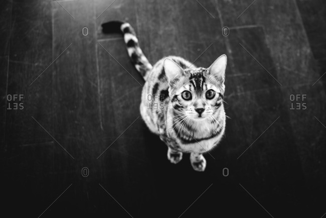 Cat sitting on ground looking up