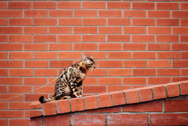 Alert cat sitting on brick wall