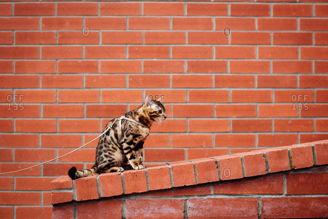 Alert cat sitting on brick wall