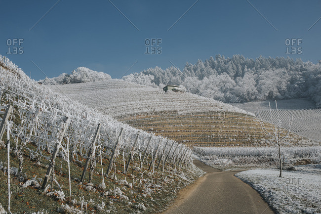 Germany- Ortenberg- vineyards in winter