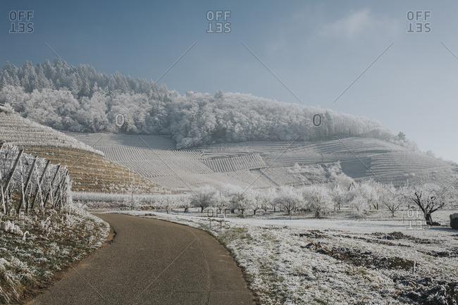 Germany- Ortenberg- vineyards in winter