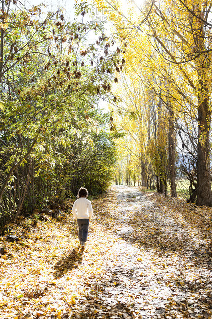 Back view of little boy walking on autumnal country road