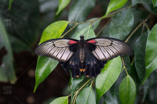 Butterfly perching on green leaves