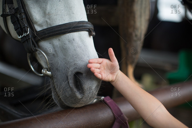 Close up of girl touching horse snout at stable